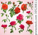 rose, red, flower 30526611
