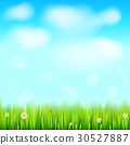 Summer landscape background, green, natural grass 30527887