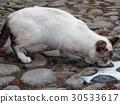 cat, pussy, a cat 30533617