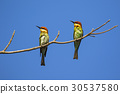 Image of bird on the branch on sky background. 30537580