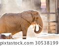 elephant, elephants, african 30538199