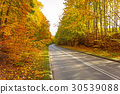 Road in the autumnal forest 30539088