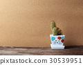 cactus, green, pot 30539951