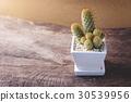 cactus, green, pot 30539956