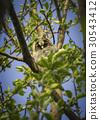 bird, chick, owl 30543412