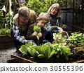 Family picking vegetable from backyard garden 30555396