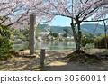แหล่งน้ำ,สระน้ำ,ดอกซากุระบาน 30560014