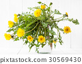 dandelion, flower, root 30569430