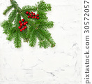 Christmas tree branches white wall texture stone  30572057