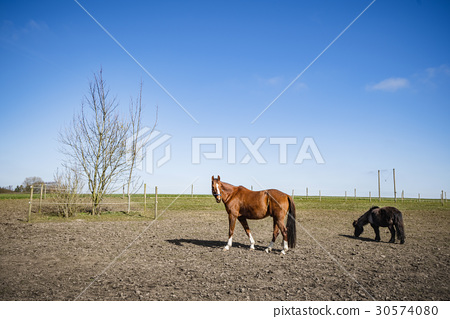 Two horses on a rural field 30574080