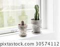 cactus, pot, plant 30574112