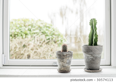 Cactus in flower pots in a bright window 30574113