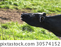 Cow growls in happiness 30574152