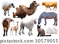 set of farm animals 30579055