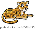 Leopard or Jaguar Cartoon 30595635