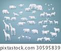Illustration of wild animals  30595839