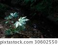 Yetde leaves 30602550