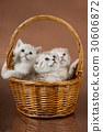 kittens 30606872