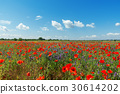 red poppies field and blue sky with clouds 30614202
