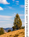 forest, mountain, spruce 30614215