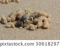 Beach crab 30618297