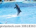 dolphin, dolphins, dolphin show 30618363
