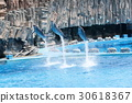 dolphin, dolphins, jumping 30618367