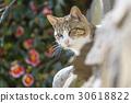 毛孩 貓 貓咪 30618822
