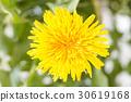flower, bloom, blossom 30619168