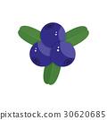 blueberry on white background 30620685