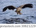 flying, hunt, hunting 30621229