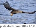 hunt, hunting, bird 30621231