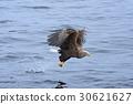 hunt, hunting, bird 30621627