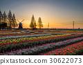 akebono mountain farm park, tulip field, wind mill 30622073