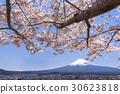 mt. arayama sengen park, yoshino cherry tree, cherry blossom 30623818