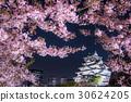 Osaka Castle Park Nishinomaru garden cherry tree 30624205