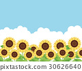 sunflower, sunflowers, bloom 30626640