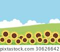sunflower, sunflowers, summer 30626642