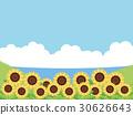sunflower, sunflowers, summer 30626643