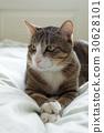 猫 30628101