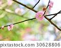 桃花 树枝 春天 30628806