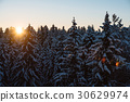 forest, snow, snowy 30629974