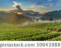 Strawberry farm at Doi Angkhang, Chiangmai 30643988