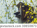 Birdhouse with its inhabitant starling 30650873