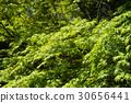 tender, green, verdure 30656441