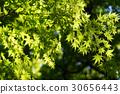 tender, green, verdure 30656443
