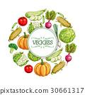 Vegetables sketch poster for food label design 30661317