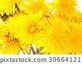 flower, summer, fresh 30664121