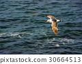 美國 聖地牙哥 拉霍亞海灘 30664513