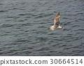美國 聖地牙哥 拉霍亞海灘 30664514